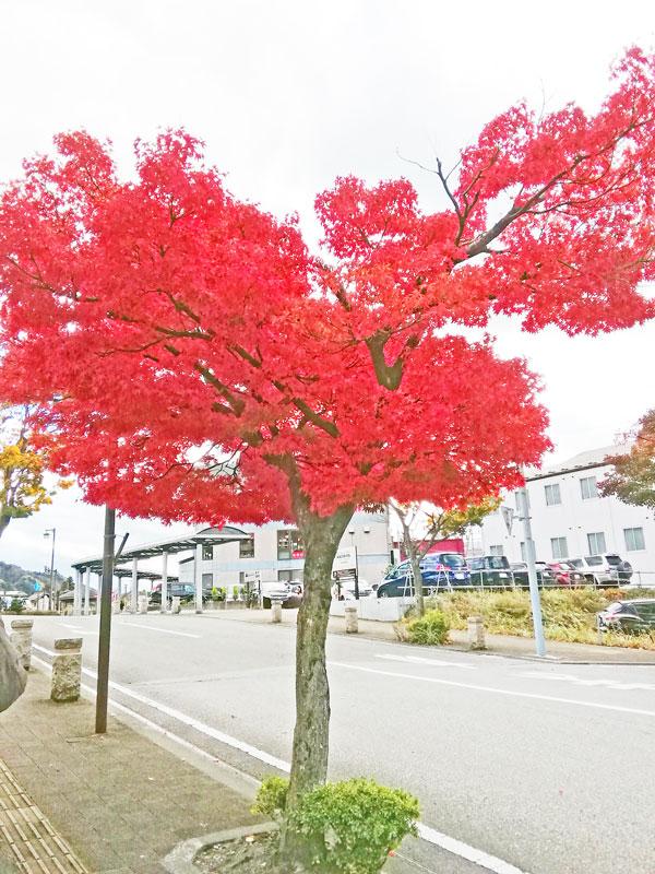 紅葉(全体)