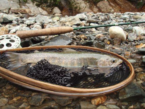 WINSTON LT #4と岩魚