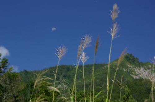 ススキと青空、名残の月