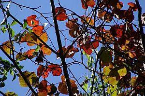 紅葉の始まった梢越しに見えた秋空