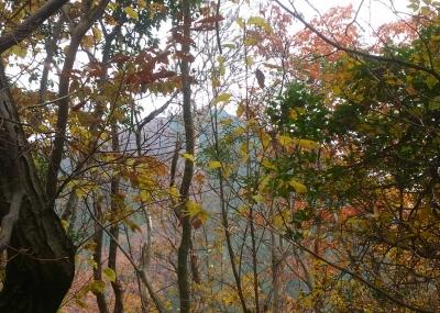 樹間から戒場山を望む