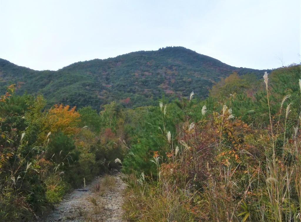 西光寺山をふもとから望む