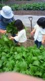 松山ばあちゃんの畑