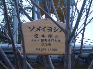 剛くん寄贈・ソメイヨシノ