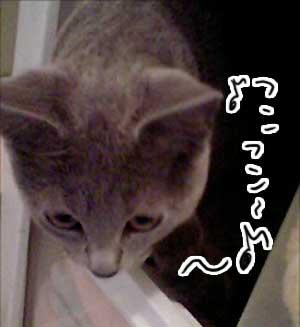 お風呂場01