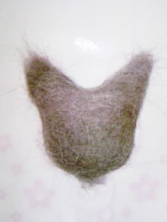 ココアの毛でココア