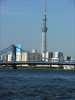 東京スカイツリーと橋