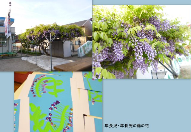 2018藤の花