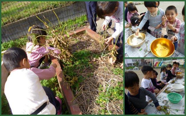 2019大豆収穫