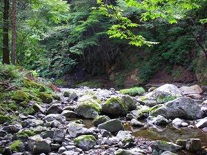 上野村 本谷毛針専用区