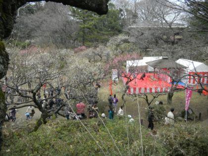大倉山観梅会