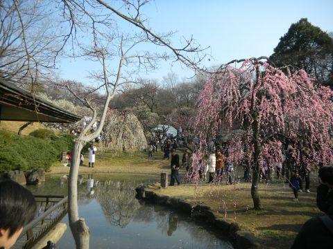 大倉山 観梅会5