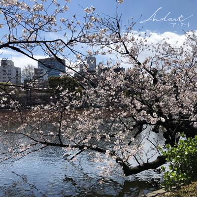 上野公園の桜 不忍池