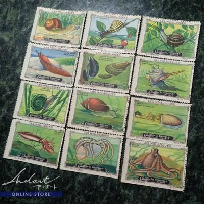 【 Andart 】Chocolate Card / Cailler swiss / Les Mollusques / 1920