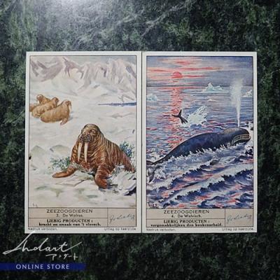 【 Andart 】LIEBIG PRODUCTEN / ZEEZOOGDIEREN / 1941