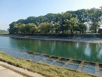 矢部川と中ノ島公園の大楠林