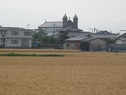 麦秋にたつ今村カトリック教会