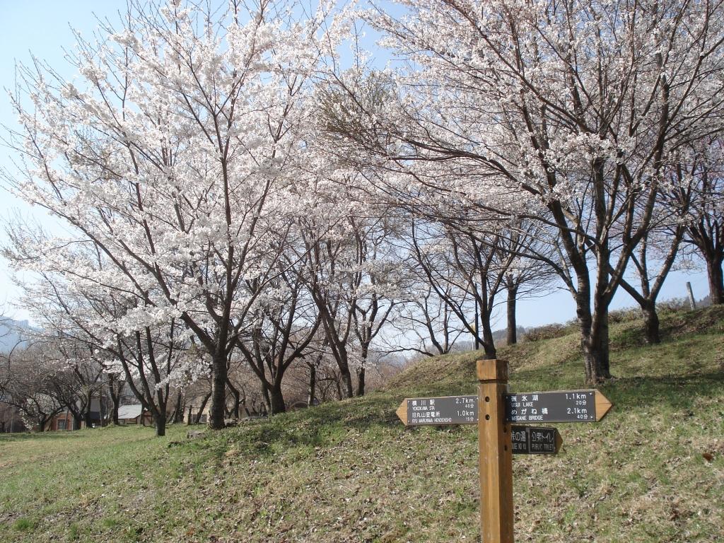 峠の湯 桜