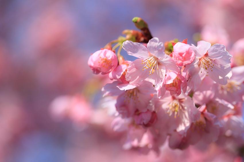 20110329_新宿御苑他_0014.jpg