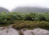 硫黄山のまわりの低木
