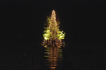 久住高原コテージ10周年記念の樹