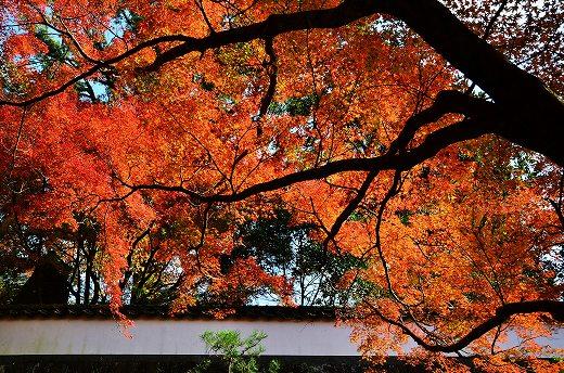 普現寺の紅葉