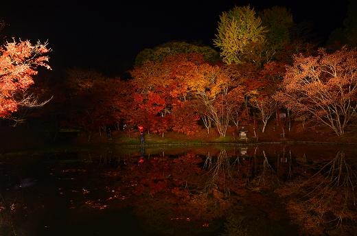 用作公園の紅葉&ライトアップ