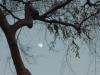 月光にて1