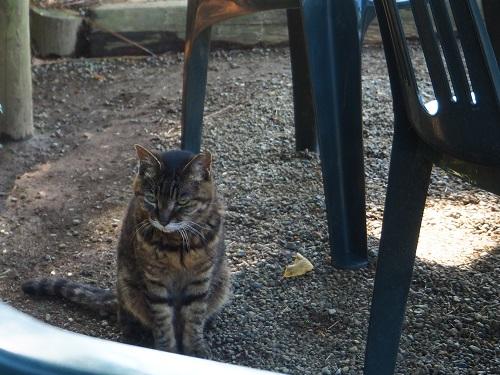 旧古河庭園の猫ちゃん.jpg
