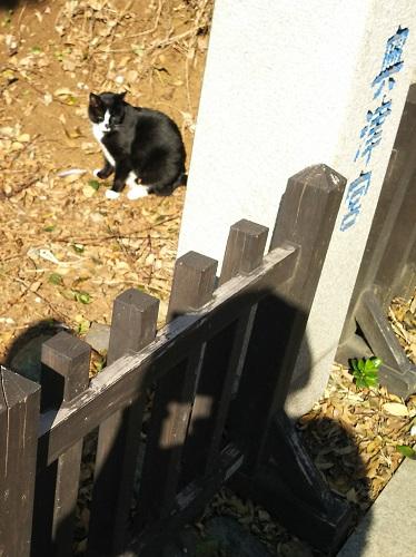 江ノ島の猫2.jpg