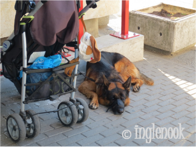 エストニアのまちぼう犬