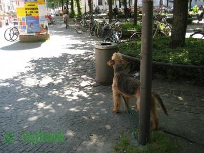 ドイツ、ミュンヘンのまちぼう犬