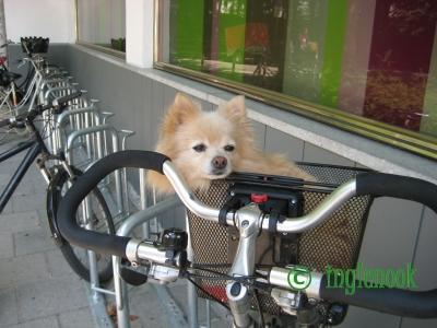 ドイツのまちぼう犬 かご犬