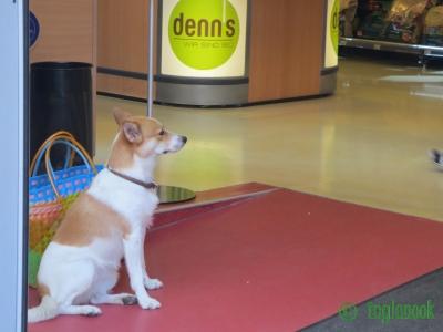世界のまちぼう犬 オーストリアのまちぼう犬