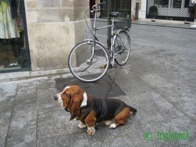 世界のまちぼう犬 フランスのまちぼう犬