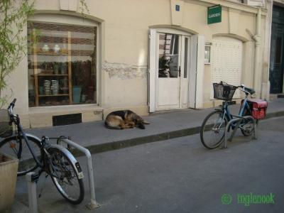 世界のまちぼう犬 パリのまちぼう犬