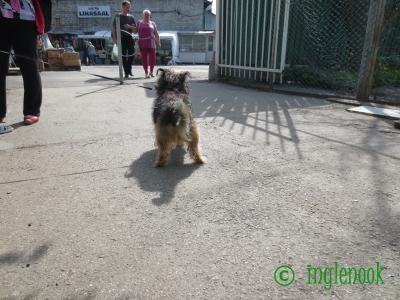世界のまちぼう犬 エストニアのまちぼう犬