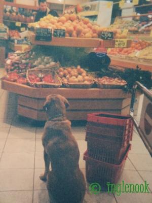 世界のまちぼう犬 フランス パリのまちぼう犬 留守番犬
