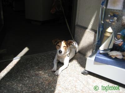 世界のまちぼう犬 ドイツのまちぼう犬 留守番犬
