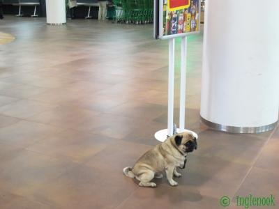 オーストリアのまちぼう犬  留守番犬