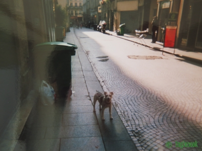 世界のまちぼう犬 フランス パリのまちぼう犬