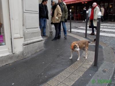 フランス パリのまちぼう犬 留守番犬