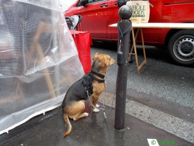 フランスのまちぼう犬 留守番犬