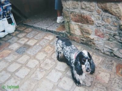 フランスのまちぼう犬