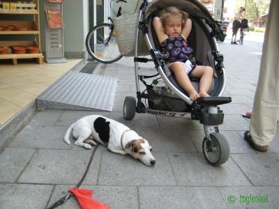 ドイツ ミュンヘンのまちぼう犬 留守番犬