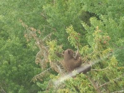 スィグルダ−トゥライダ ロープウェイから見えるクマ