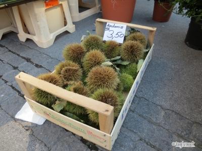 栗 いが栗 ザルツブルグ グリューンマルクト Grünmarkt