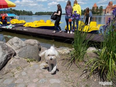 トゥラカイ城 Trakų salos pilis リトアニア トゥラカイ 湖 貸ボート