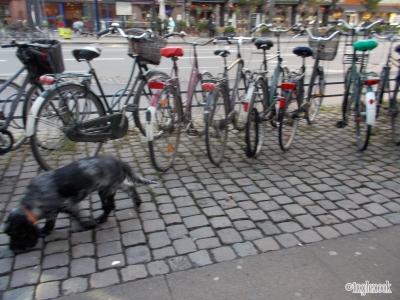 犬 自転車 コペンハーゲン