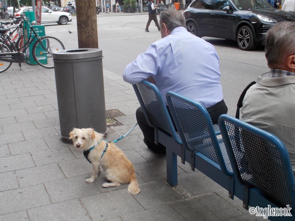 ドイツ ミュンヘン ハーネスを付けた犬
